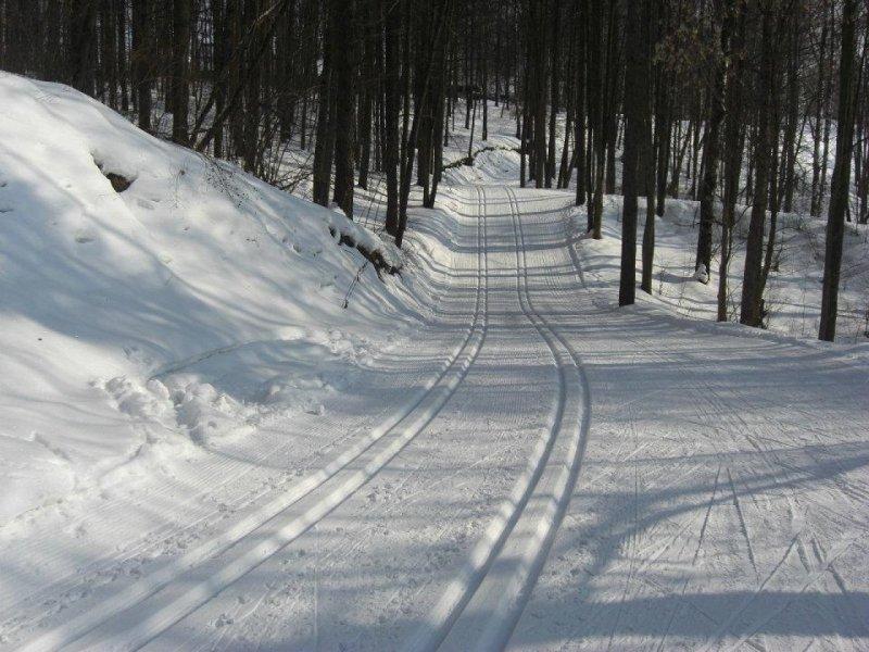 """""""Езжай своей лыжнёй"""": экс-чиновник ездит на машине по лыжным трассам, выгуливая собаку"""