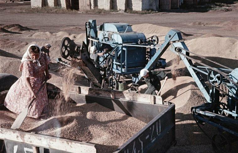 Сбор урожая пшеницы на ферме, Украина