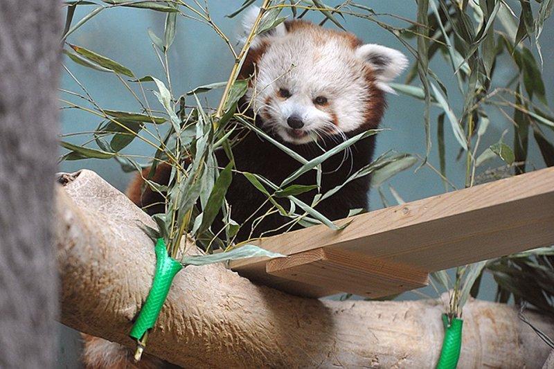Московский зоопарк показал, чем питаются его обитатели во время карантина