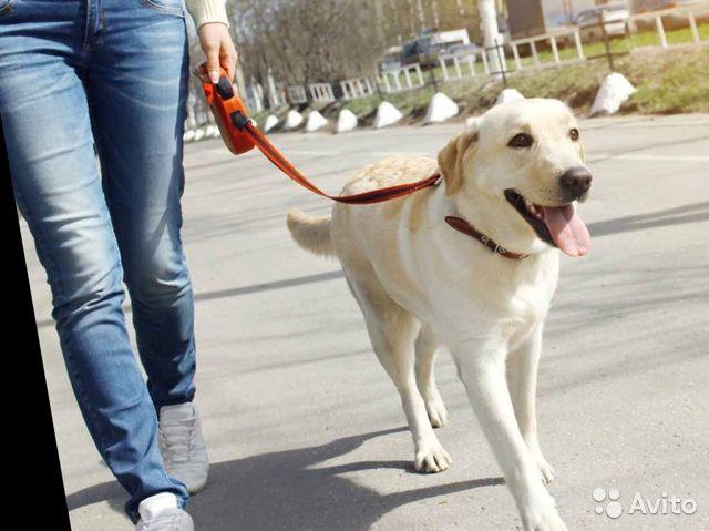 Соловьев ополчился на фальшивых собачников, обходящих карантин