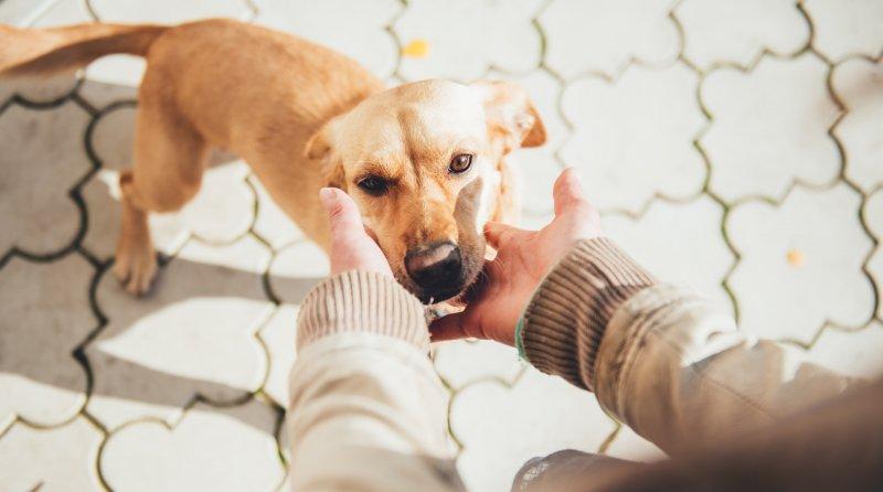 """""""Чтобы сдохли эти собачки"""": мэр Алушты публично высказалась о своем отношении к животным"""