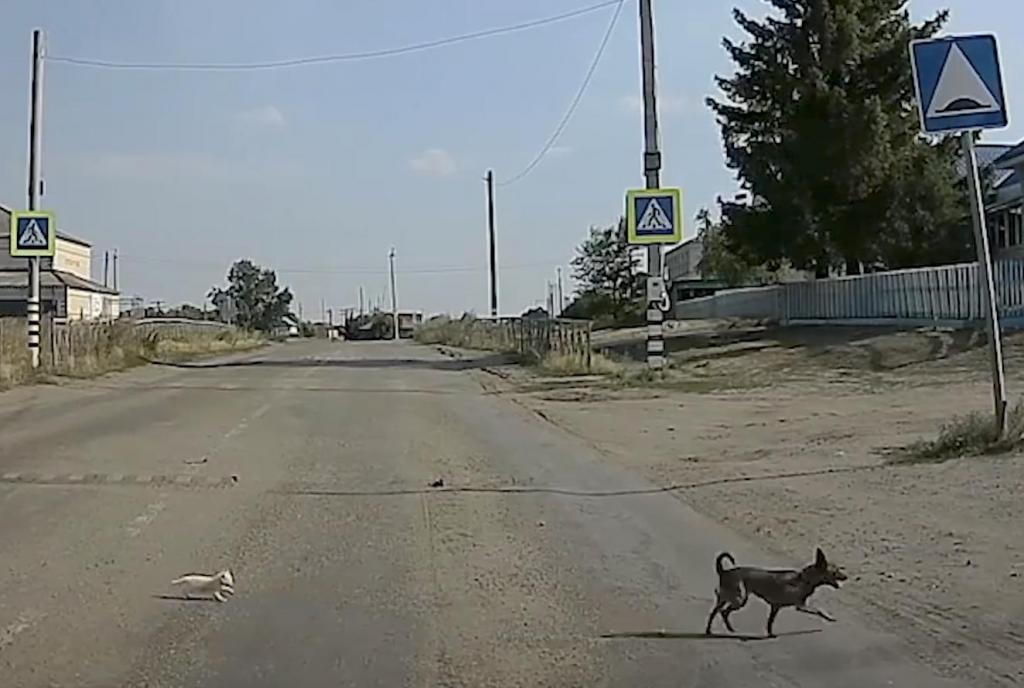 """""""Милота зашкаливает"""": в Курганской области пес помог перейти дорогу котенку и спас его от возможной гибели"""