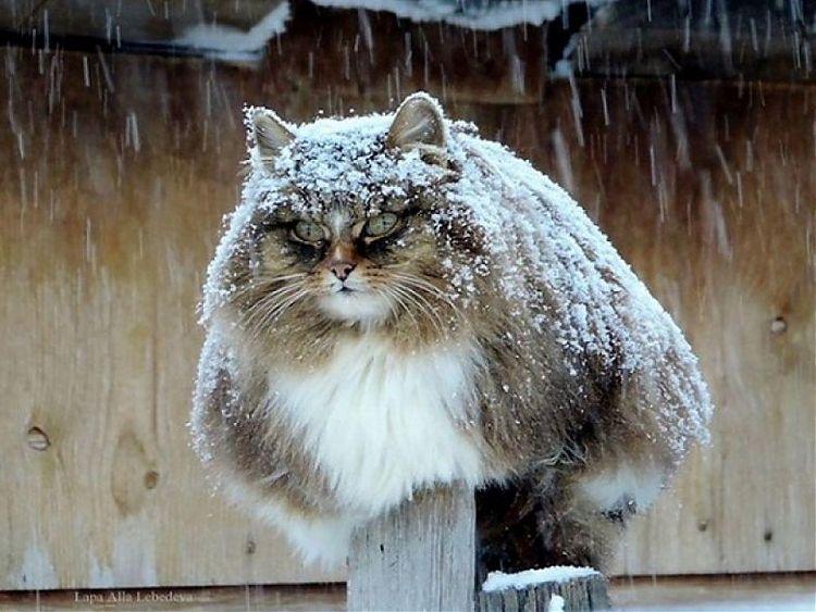 В нескольких регионах России выпал первый снег