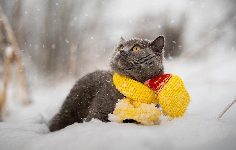 В Хабаровске выпал первый снег