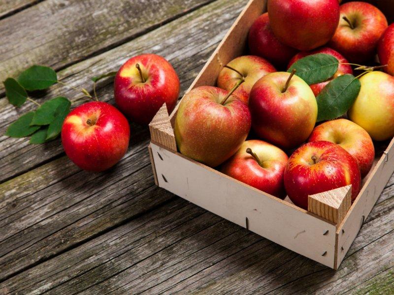 Польские фермеры не готовы к потере лидерства на яблочном рынке