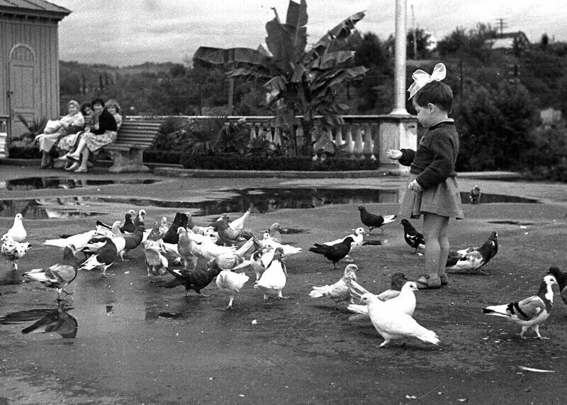 Николай Паламодов, 1959 год, Адлер