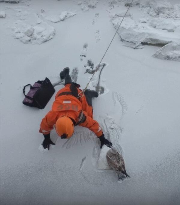 Спасатели вызволили чайку из ледяного плена