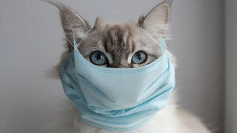В России зарегистрирована первая в мире вакцина для животных от COVID-19