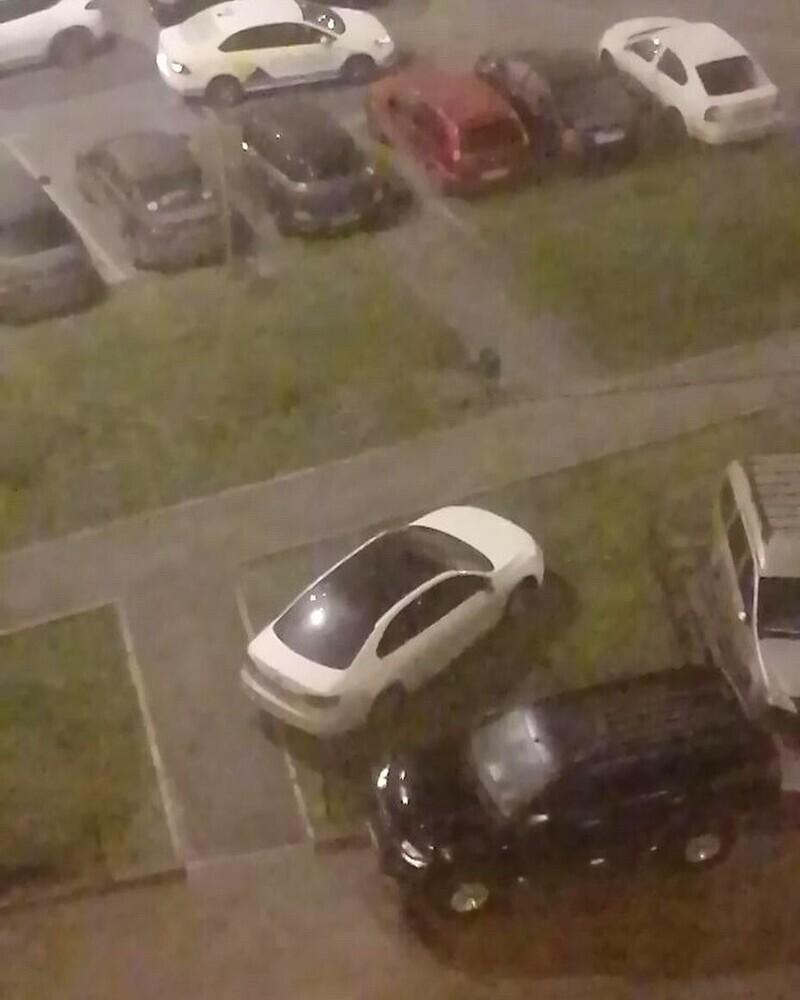 Асы парковки, которых ненавидит весь двор