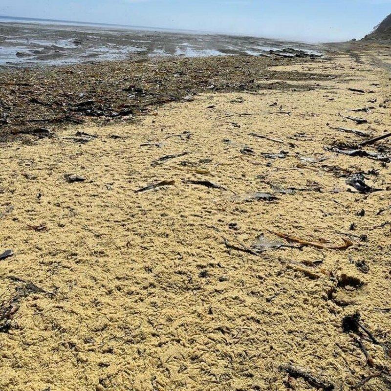 На Сахалине появился икорный пляж