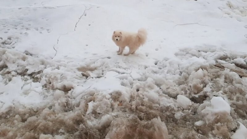 Экипаж ледокола спас потерявшуюся собаку